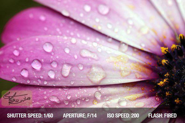 نکات عکاسی از گلها